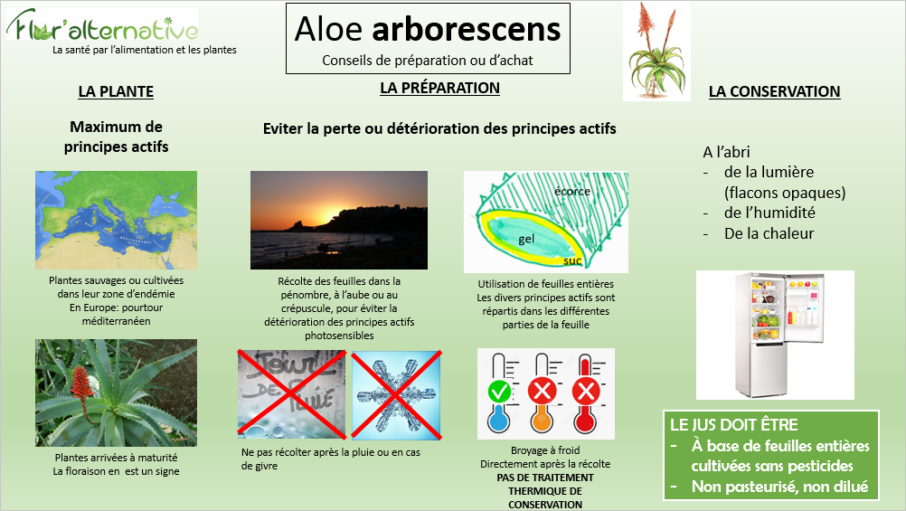 Quels critères de qualité pour une efficacité optimale de l' Aloe arborescens?