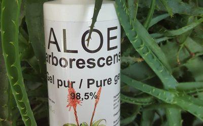 Le gel d'Aloe arborescens, l'ami de votre peau